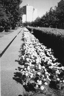 Burk Burnett Park