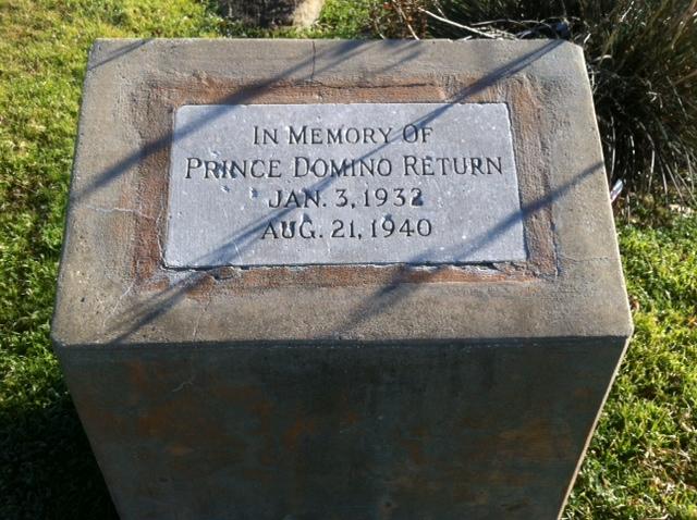 Prince Domino